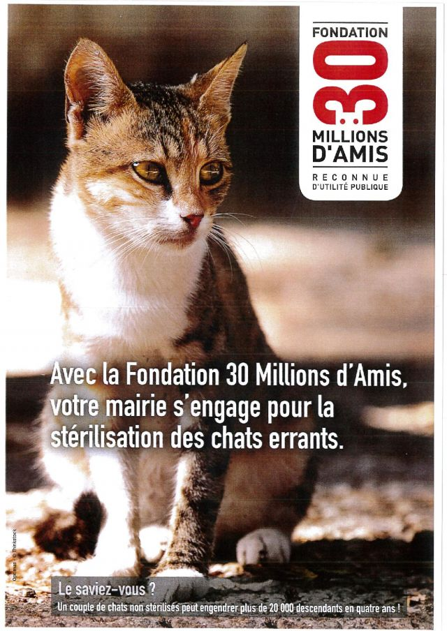affiche chats page 001